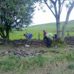 Volunteers Walling