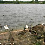 Cheddar Reservoir