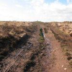 BDown path (31)