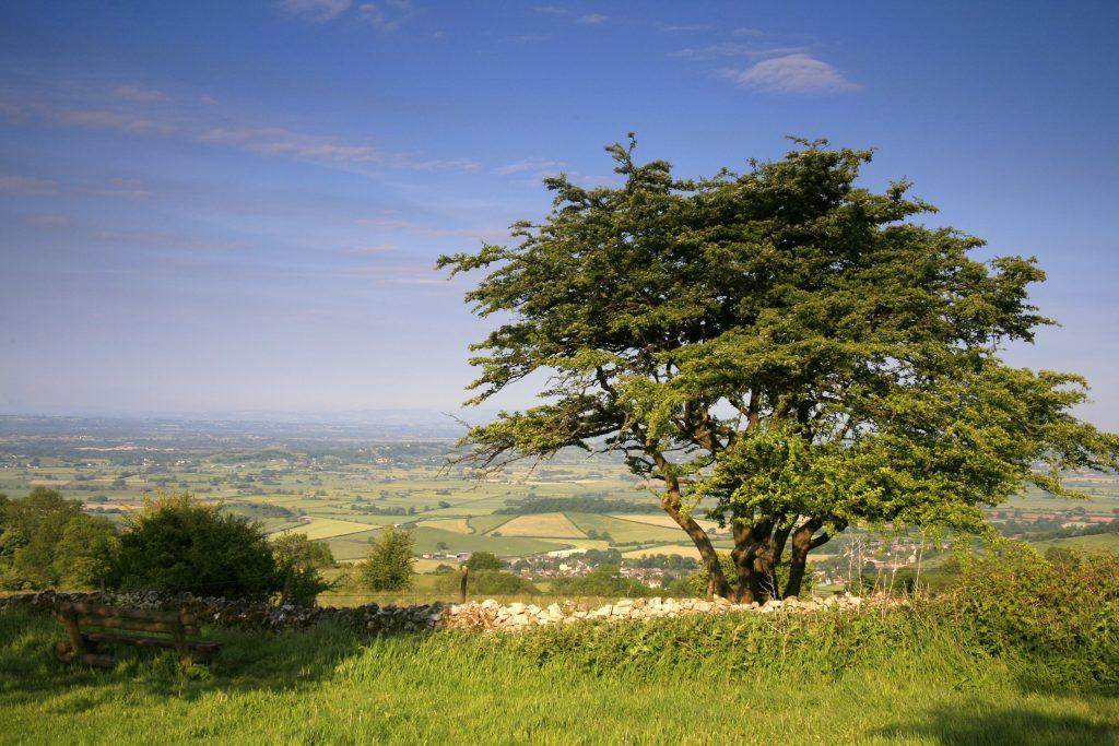 Tree Banner Image