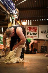 Blade Shearing contest Fernhill Farm Mendip Hills AONB